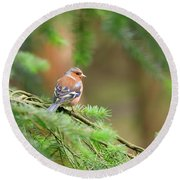 Common Chaffinch Fringilla Coelebs Round Beach Towel