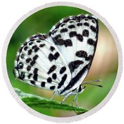 Common Pierrot Butterfly Round Beach Towel