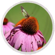 Cone Flower Butterfly At Rest Round Beach Towel