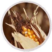 Corn In Dry Husk Round Beach Towel