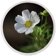 Cosmos In The Cottage Garden Round Beach Towel
