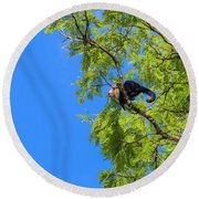 Costa Rica Capuchin Momma And Baby Aboard Round Beach Towel