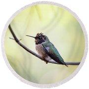 Costa's Humminbird On A Branch  Round Beach Towel