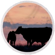 Cow And Calves After Sunset 01 Round Beach Towel by Rob Graham
