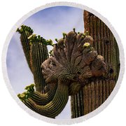 Crested  Round Beach Towel
