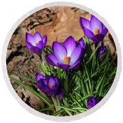 Crocus In Spring 2019 I Round Beach Towel