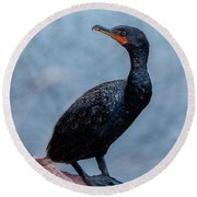 Curious Cormorant Round Beach Towel