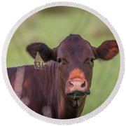 Curious Cow #636 Round Beach Towel by Tom Claud