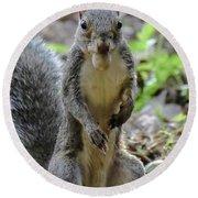 Cute Squirrel Round Beach Towel
