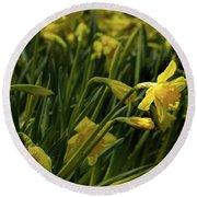 Daffodil Starlight Round Beach Towel