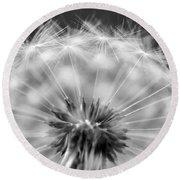 Dandelion Seeds Pod Macro Round Beach Towel