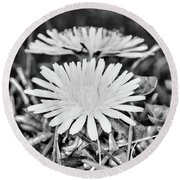Dandelion Up Close And Personal Black And White Round Beach Towel