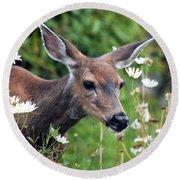 Deer In Daisies Round Beach Towel