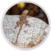 Desert Spiny Lizard H1809 Round Beach Towel by Mark Myhaver