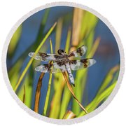 Dragonfly Perched By Pond Round Beach Towel