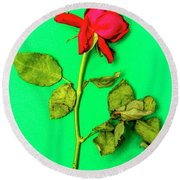 Dying Flower Against A Green Background Round Beach Towel