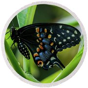 Eastern Black Swallowtail - Closed Wings Round Beach Towel