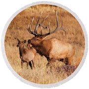 Elk And Mate In Rocky Mountain Meadow Round Beach Towel
