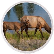 Elks Grazing On The Madison River, Wy Round Beach Towel by Lon Dittrick
