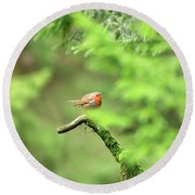 English Robin Erithacus Rubecula Round Beach Towel