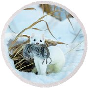 Ermine Round Beach Towel by Michael Chatt