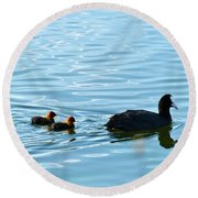 Eurasian Coot And Offspring In Ria Formosa. Algarve, Portugal Round Beach Towel
