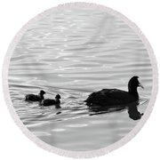Eurasian Coot And Offspring In Ria Formosa, Portugal. Monochrome Round Beach Towel