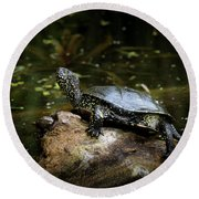 European Pond Turtle Sitting On A Trunk In A Pond Round Beach Towel