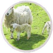 Ewe With Lambs Round Beach Towel