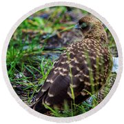 Falcon Chimango Caracara, Tierra Del Fuego National Park, Ushuaia, Argentina Round Beach Towel