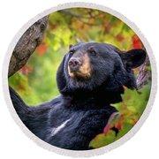 Fall Black Bear Round Beach Towel