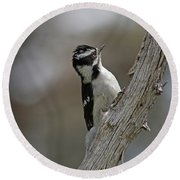 Female Downy Woodpecker Round Beach Towel
