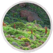 Field Of Echium Wildpretii In The Teide National Park Round Beach Towel