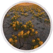 Fields Of Gold Round Beach Towel by Dustin LeFevre