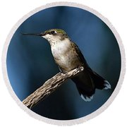 Flick Of The Tongue - Ruby-throated Hummingbird Round Beach Towel