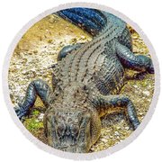 Florida Gator 2 Round Beach Towel