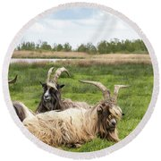 Goats  Round Beach Towel by Anjo Ten Kate
