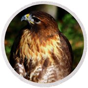 Golden Eagle Portrait Round Beach Towel