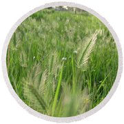 Grass Seeds The  Paddock Round Beach Towel