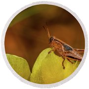 Grasshopper 4600 Round Beach Towel