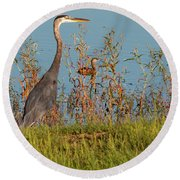 Great Blue Heron Looking For Food Round Beach Towel