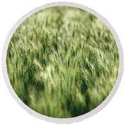 Green Growing Wheat Round Beach Towel