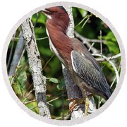 Green Heron In The Glades Round Beach Towel