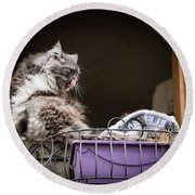Grey Long Haired Cat Sitting On A Window Sill Round Beach Towel