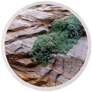 Growing From The Rock Terrain In Zion  Round Beach Towel