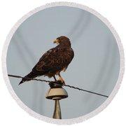 Hawk On An Old Power Line Round Beach Towel