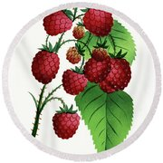Hepstine Raspberries Hanging From A Branch Round Beach Towel