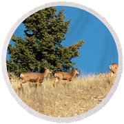 Herd Of Colorado Deer Round Beach Towel