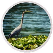 Heron In The Lily Pads Round Beach Towel