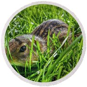 Hiding In The Grass Round Beach Towel